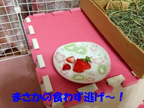 IMG_3837.いちご