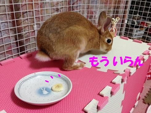 IMG_4608.ばなな