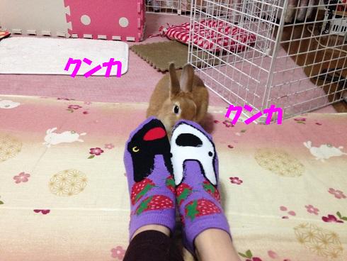 IMG_4443.クンクン