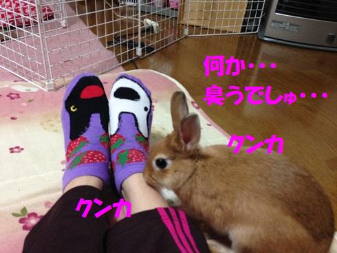 IMG_4441.クンクン