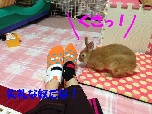 IMG_4324.クンクン