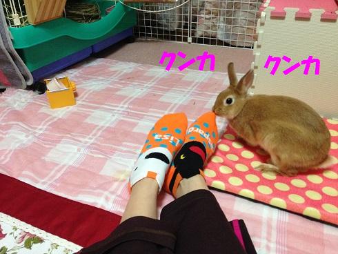 IMG_4325.クンクン