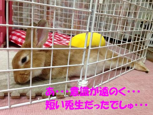 IMG_4452.クンクン