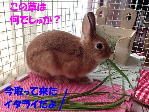 IMG_5077.生牧草