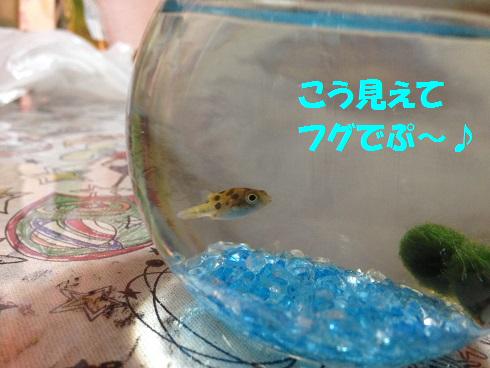 IMG_5252.トラちゃん
