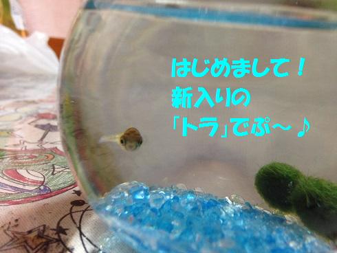 IMG_5251.トラちゃん