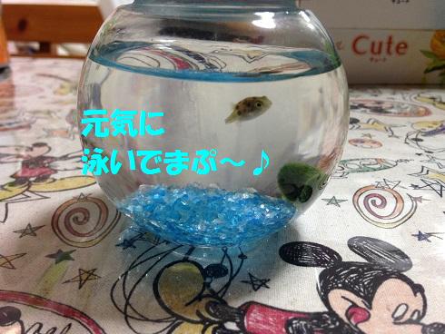 IMG_5271.トラちゃん