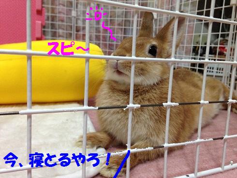 IMG_4873.ねむい
