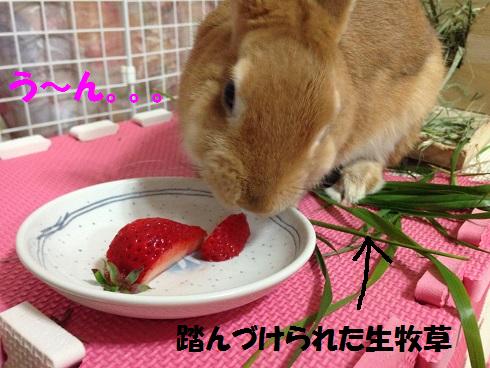 IMG_5363.いちご