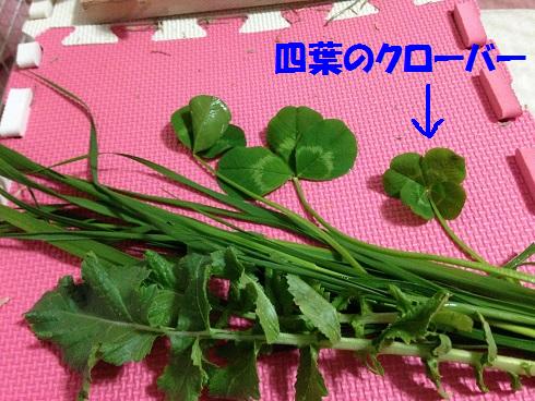 IMG_5438.四葉