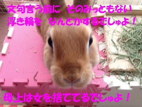 IMG_5434.文句