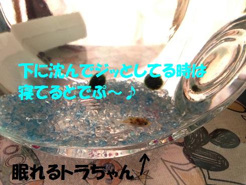 IMG_5497.トラちゃん