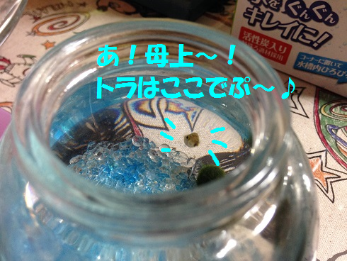 IMG_5460.トラちゃん
