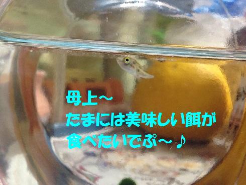IMG_5923.トラちゃん