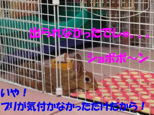 IMG_5681.しょぼぼん