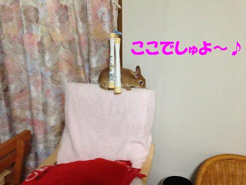 IMG_5593.かくれんぼ
