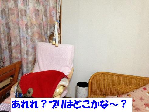 IMG_5594.かくれんぼ