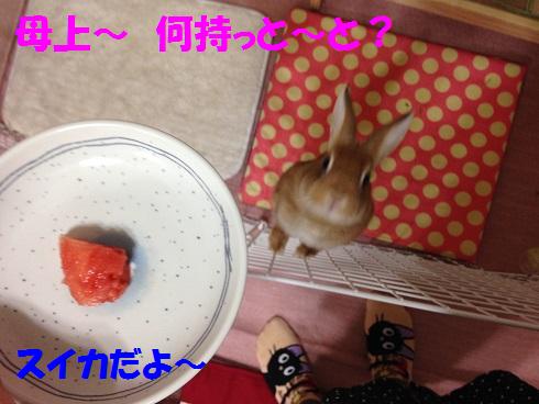 IMG_6350.スイカ