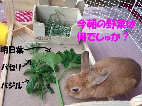 IMG_6420.野菜
