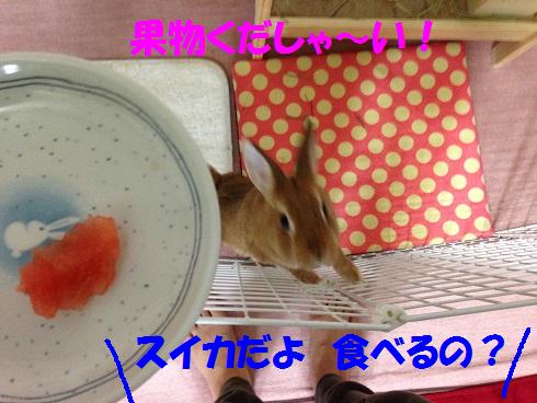 IMG_6377.スイカ