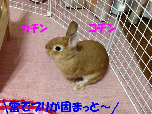 IMG_6501.かみなり