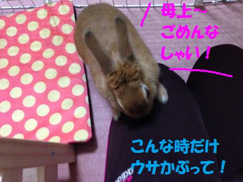IMG_6404.うさかぶり