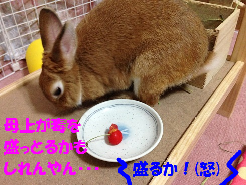 IMG_6510.さくらんぼ