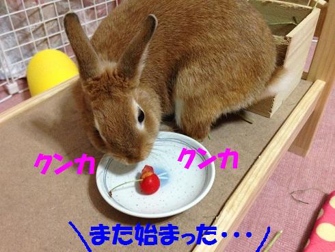 IMG_6509.さくらんぼ