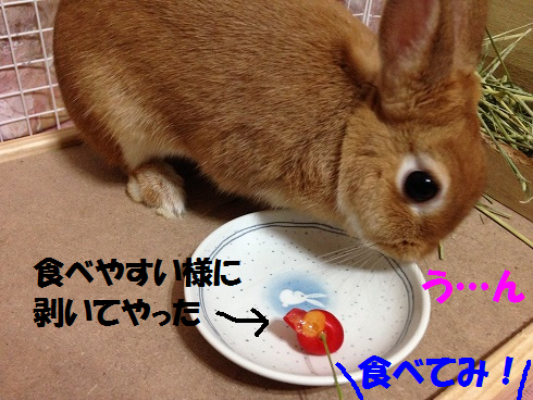 IMG_6508.さくらんぼ