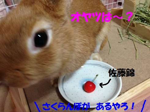 IMG_6506.さくらんぼ