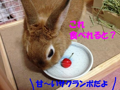 IMG_6505.さくらんぼ