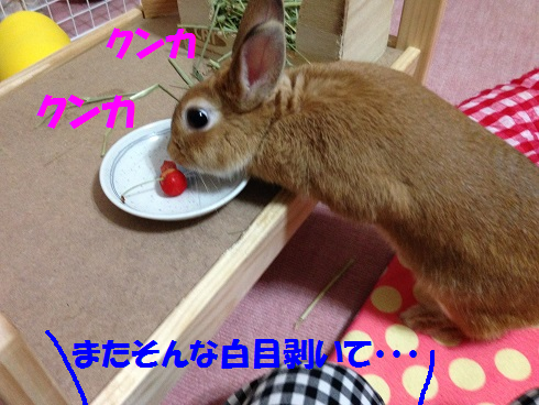 IMG_6512.さくらんぼ