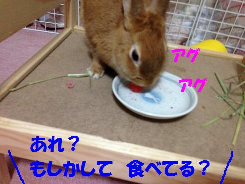 IMG_6521.さくらんぼ
