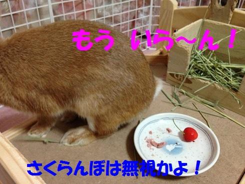 IMG_6519.さくらんぼ