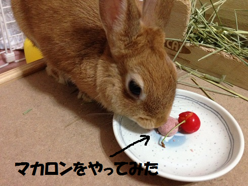 IMG_6514.さくらんぼ