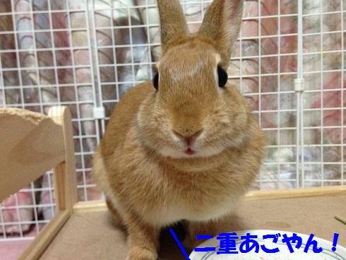 IMG_6544.さくらんぼ