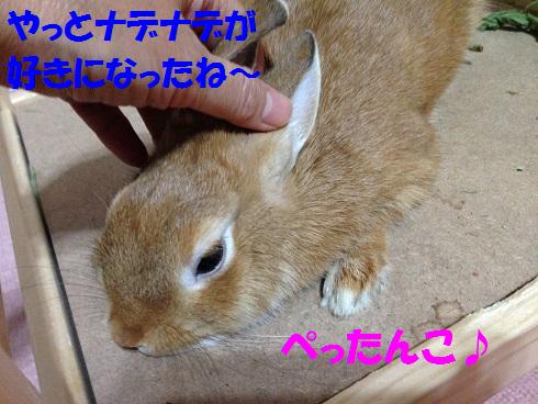 IMG_6891.ナデナデ