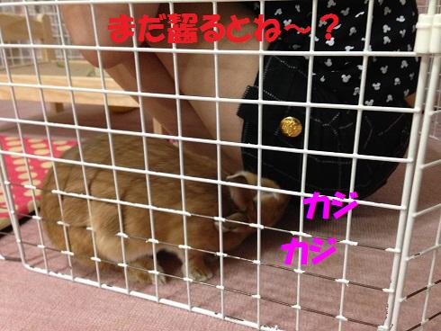 IMG_6965.ねーちゃん