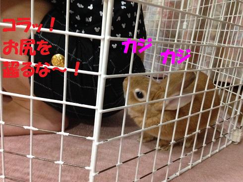 IMG_6956.ねーちゃん