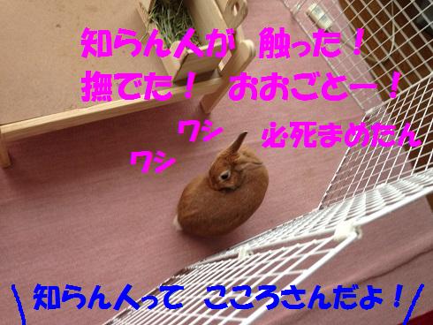 IMG_7012.こころさん