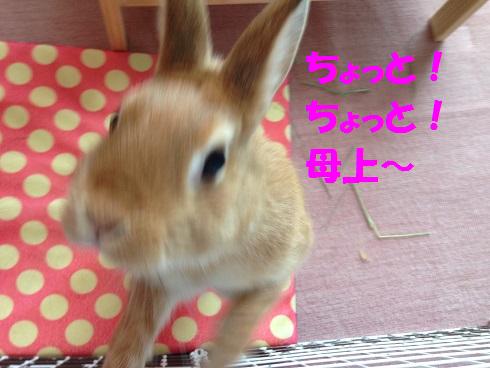 IMG_6694.太った?