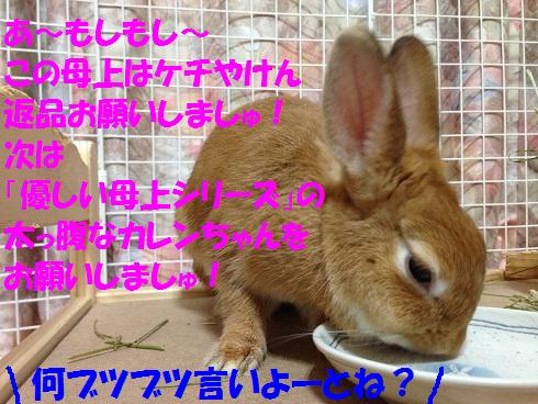 IMG_6761.桃
