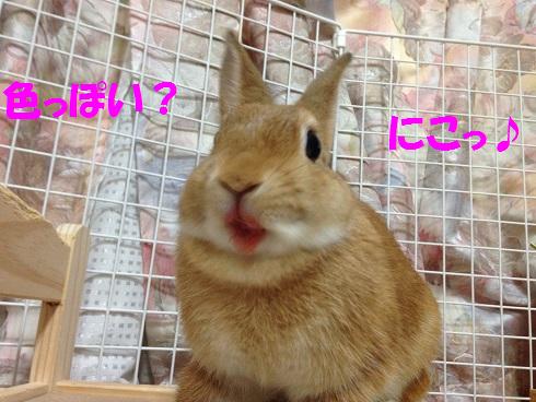 IMG_7576.スイカ
