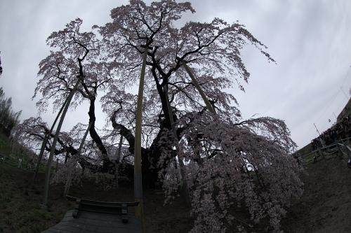 20140418_三春滝桜02
