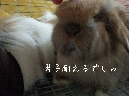2014-03-11-14-18-18_deco_resize_20140311_143440.jpg