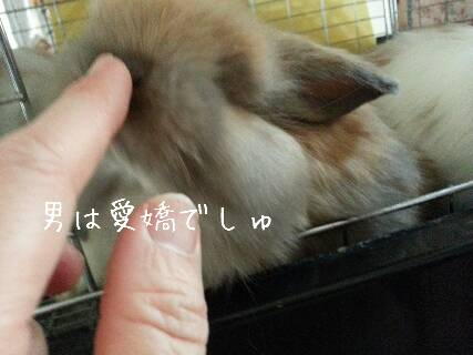 2014-03-11-14-21-10_deco_resize_20140311_143439.jpg