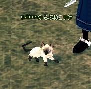 らぶシャム猫