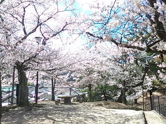 宮島桜 4