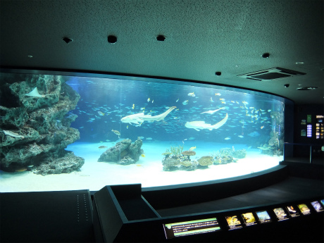 サンシャイン水族館7