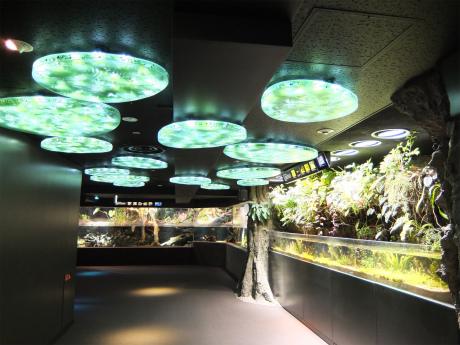 サンシャイン水族館6